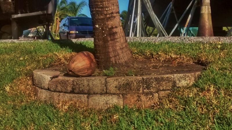 Coconut (800x450)