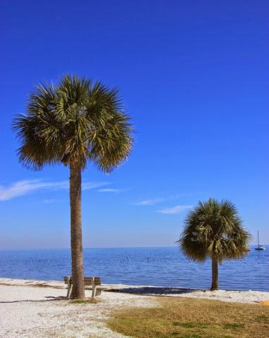 Cedar-Key-Beach_thumb2